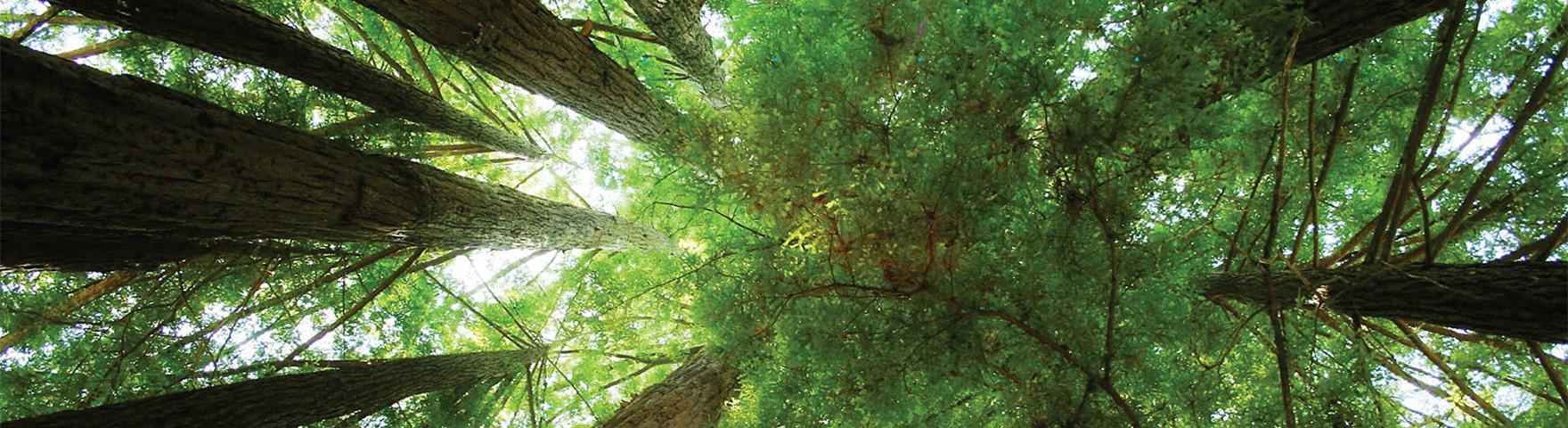 5 maneiras de diminuir seu impacto ambiental